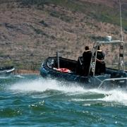 piranha-spibo-700-2